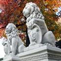 Coppia leone con scudo - statue da giardino in graniglia di marmo di Carrara 100% Made in Italy